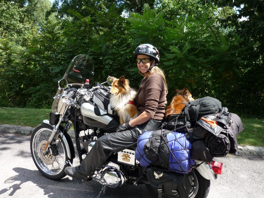 Harley motorcycle rider with dogs